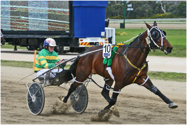 Betting strategies for harness racing