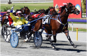 How to bet on Harness racing in Australia