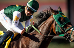 Horse betting odds to understand