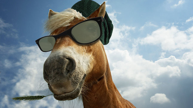 Horse with shades