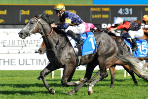 Class Races- Australia horse racing betting