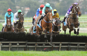 Types of horse races-Hurdle horse race