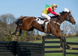 Types of horse races- Steeple chase