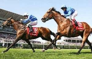 horse betting ladbrokes
