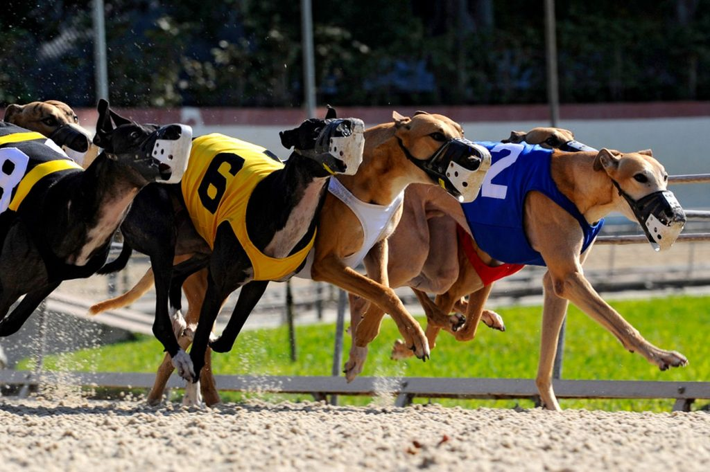 an argument against greyhound racing in the united states Learn what options are available for betting greyhounds online legally and which are the top rated greyhound betting greyhound racing  in the united states.